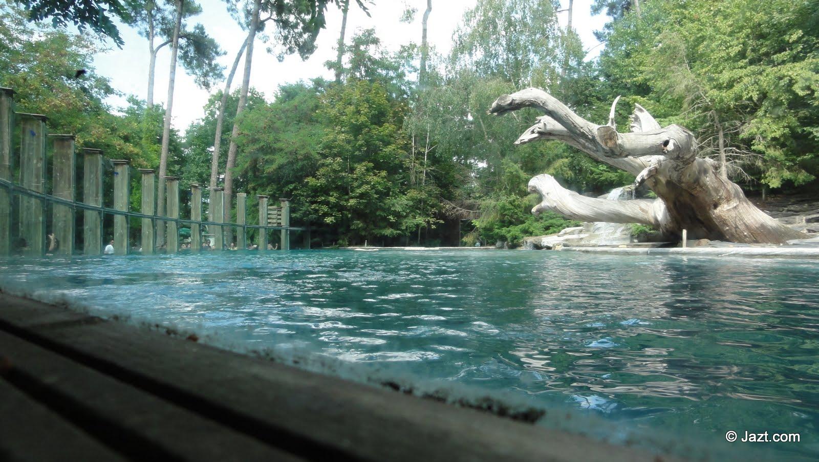 Environnement des ours polaires du Zoo de la Flèche