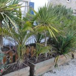 ambiance jardin à Sainte-Marine