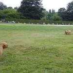chien de chasse au Parc de la Bourbansais