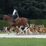 cheval et chien pour chasser