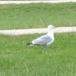 Jolie oiseau au domaine de la Bourbansais (Parc et Zoo)