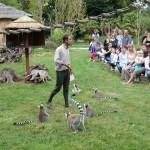 Julien et le goûter des Lémuriens au Zoo de la Bourbansais