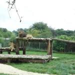 enclot des lions au Zoo de la Bourbansais