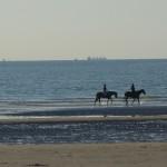 promenade des chevaux à Deauville