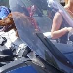 chien sur un BMW R1200RT