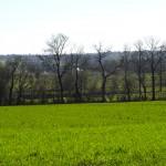 champ vert en Bretagne