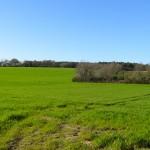 ferme en Bretagne et champ d'herbe