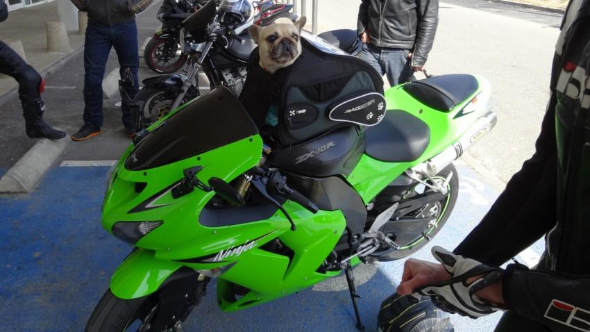 motarde à poil sur une ninja Kawasaki à Rennes
