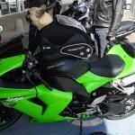Balader son chien à moto (sportive)
