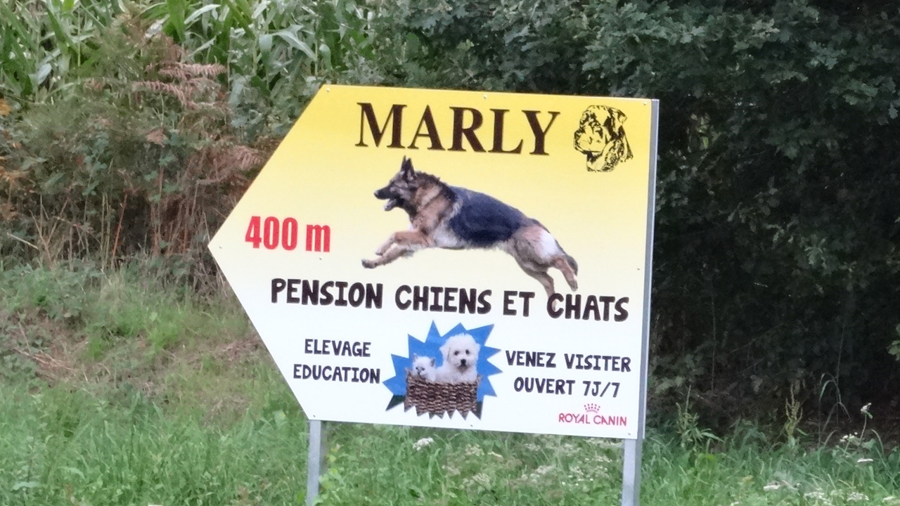 pension canine Marly