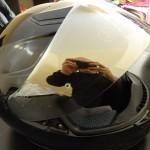 visière iridium casque moto shoei
