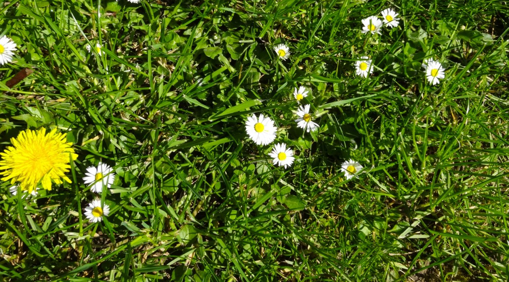 fleur de printemps en Bretagne