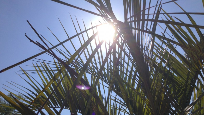 soleil dans les palmiers du Domaine des Ormes