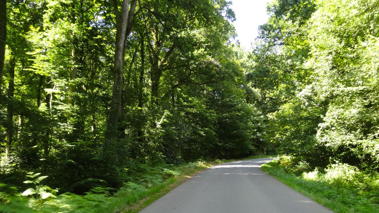 forêt de Rennes