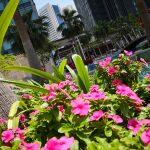 flowers Shangri-La Doha Hotel
