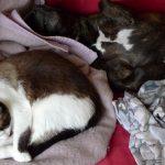 Tao le chien et Lolotte le chat sur le canapé