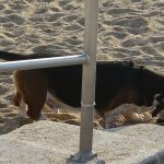 Chien sur la plage de Biarritz