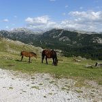 chevaux sauvages dans les montagnes