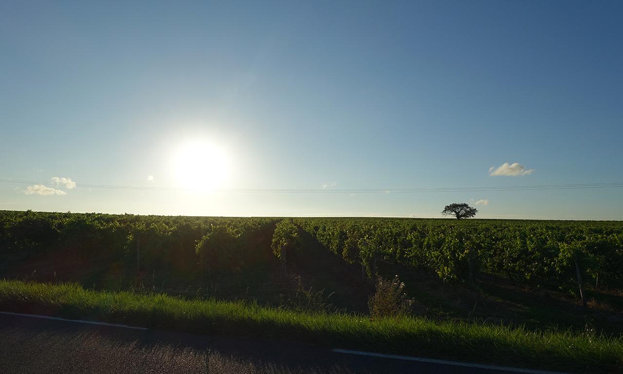 couche de soleil sur la vigne