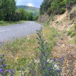 route D37, Vialas près de Le Crepon