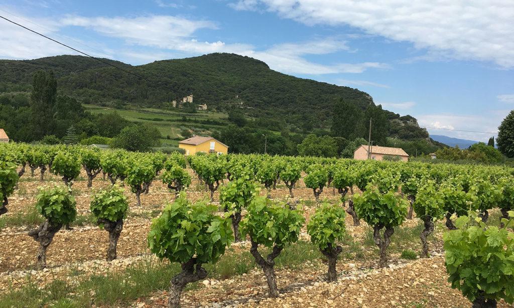 Paysage au coeur de l'Ardèche à Saint Sauveur de Cruzieres