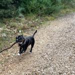 Oscar en pleine balade au coeur du Parc de la Valmasque